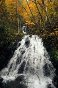 10月 せせらぎ街道の紅葉 森林公園から大倉滝への写真素材 [FYI01779990]