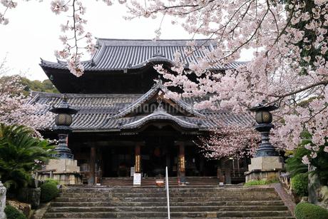 4月 桜の粉河寺 -紀州のサクラ-の写真素材 [FYI01779992]