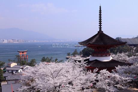 4月春,桜の厳島(宮島)の写真素材 [FYI01779996]