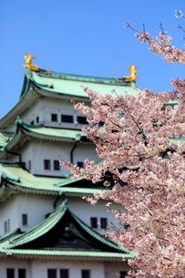 4月 桜の名古屋城の写真素材 [FYI01779998]