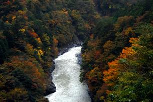 11月 紅葉の接岨峡  大井川上流の紅葉名所の写真素材 [FYI01780004]