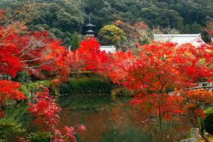 11月 紅葉の永観堂 京都の秋景色の写真素材 [FYI01780017]