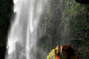 5月 阿弥陀ヶ滝 -裏見の滝-の写真素材 [FYI01780022]