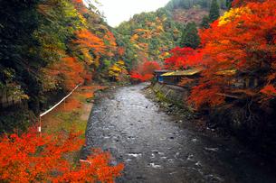 11月 紅葉の神護寺参道 京都の秋景色の写真素材 [FYI01780030]