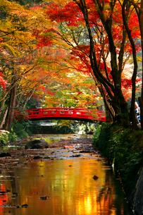 11月 紅葉の小国神社 秋彩の写真素材 [FYI01780031]