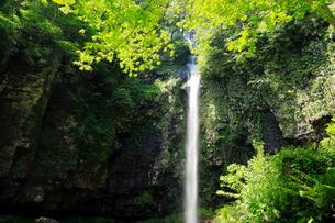 5月 緑の阿弥陀ヶ滝の写真素材 [FYI01780041]