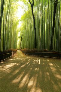 6月初夏 京都嵯峨野の竹林の道の写真素材 [FYI01780043]