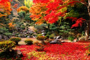 11月 紅葉の徳源院 近江の秋の写真素材 [FYI01780049]