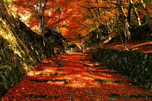 11月 紅葉の百済寺 滋賀の秋景色の写真素材 [FYI01780074]