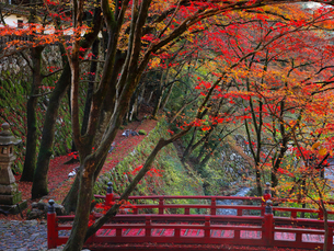 11月 紅葉の横蔵寺-美濃の正倉院-の写真素材 [FYI01780083]