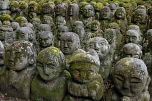 11月秋 愛宕念仏寺の石仏 京都奥嵯峨の写真素材 [FYI01780112]