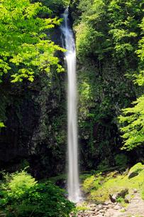 5月 緑の阿弥陀ヶ滝の写真素材 [FYI01780113]
