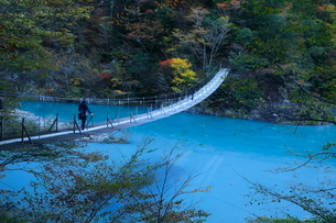 11月 夢の吊橋 紅葉の寸又峡の写真素材 [FYI01780119]