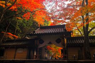 11月秋 紅葉の永源寺 滋賀の秋景色の写真素材 [FYI01780128]
