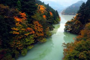 11月 紅葉の井川湖 大井川上流のダム湖の写真素材 [FYI01780142]