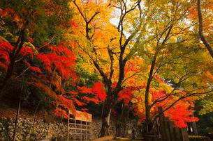 11月秋 紅葉の永源寺 滋賀の秋景色の写真素材 [FYI01780151]