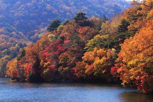 10月 紅葉の中禅寺湖 奥日光の秋の写真素材 [FYI01780167]