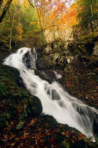 10月 せせらぎ街道の紅葉 森林公園から大倉滝への写真素材 [FYI01780181]