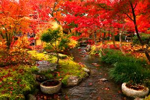 11月 紅葉の永観堂 京都の秋景色の写真素材 [FYI01780182]