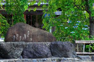 6月 祇園白川のアジサイ咲く吉井勇碑 の写真素材 [FYI01780185]