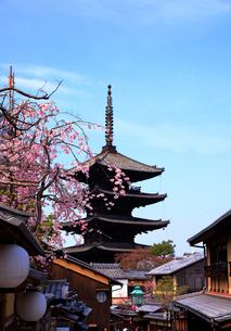 3月 枝垂桜の八坂の塔 京都東山の風景の写真素材 [FYI01780192]