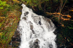 10月 せせらぎ街道の紅葉 森林公園から大倉滝への写真素材 [FYI01780194]