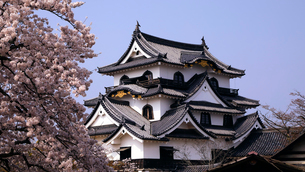 4月 桜咲く彦根城天守閣の写真素材 [FYI01780198]