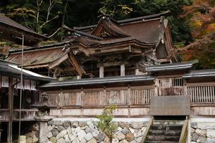 11月 紅葉の大矢田(おやだ)神社 -美濃の天然記念物-の写真素材 [FYI01780202]