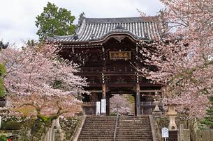 4月 桜の粉河寺 -紀州のサクラ-の写真素材 [FYI01780208]