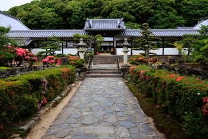 5月 新緑の興聖(こうしょう)寺 -宇治の禅寺-の写真素材 [FYI01780211]