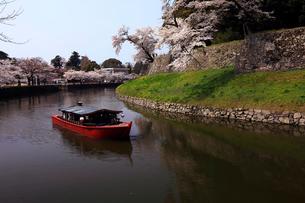 4月 桜咲く彦根城のお堀の写真素材 [FYI01780228]