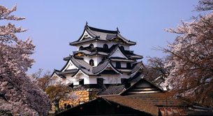 4月 桜咲く彦根城天守閣の写真素材 [FYI01780233]