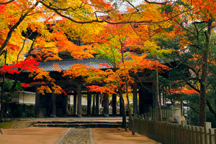 11月秋 紅葉の永源寺 滋賀の秋景色の写真素材 [FYI01780236]
