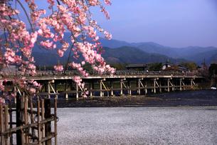 4月 桜の嵐山渡月橋  -京都の春-の写真素材 [FYI01780237]