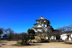 1月 青空の彦根城天守閣の写真素材 [FYI01780246]