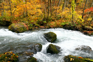 10月 紅葉の奥入瀬渓流- 東北の秋の写真素材 [FYI01780259]