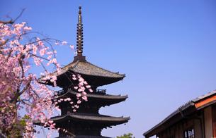 3月 枝垂桜の八坂の塔-京都東山の風景-の写真素材 [FYI01780266]