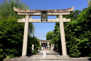 5月 春の晴明神社の写真素材 [FYI01780267]