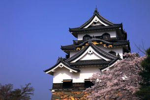 4月 桜咲く彦根城天守閣の写真素材 [FYI01780275]
