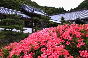 5月 新緑の興聖(こうしょう)寺 -宇治の禅寺-の写真素材 [FYI01780300]