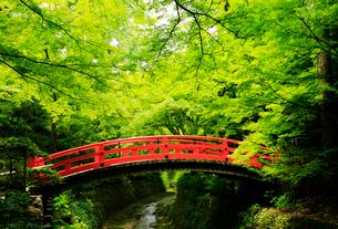 5月 新緑の北野天満宮のもみじ苑の写真素材 [FYI01780304]