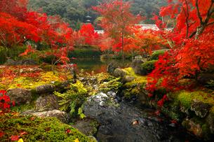 11月 紅葉の永観堂 京都の秋の写真素材 [FYI01780320]