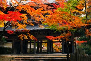 11月秋 紅葉の永源寺 滋賀の秋景色の写真素材 [FYI01780327]