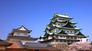 3月 桜の名古屋城の写真素材 [FYI01780333]