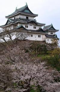 4月 桜の和歌山城 -紀州のサクラ-の写真素材 [FYI01780335]