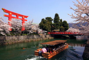 3月 琵琶湖疏水の桜並木の写真素材 [FYI01780349]