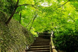 5月 新緑の北野天満宮のもみじ苑の写真素材 [FYI01780353]