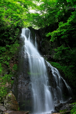 7月 八岳 やたけ の滝-夏の八ヶ岳-の写真素材 [FYI01780356]