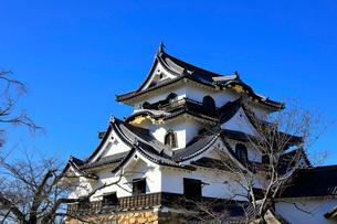 1月 青空の彦根城天守閣の写真素材 [FYI01780364]