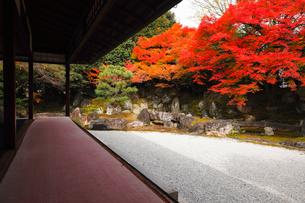 11月 紅葉の圓徳院  京都の庭園  の写真素材 [FYI01780371]